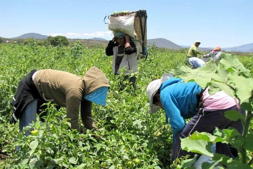 Las transformaciones en el campo latinoamericano